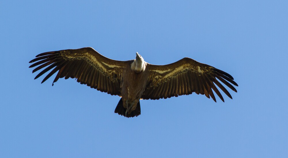 birding2
